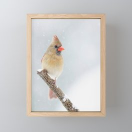 Female Northern Cardinal Framed Mini Art Print