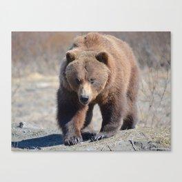 Alaskan Grizzly Bear - Spring Canvas Print