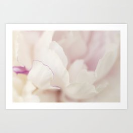 Pink and White Peony Art Print