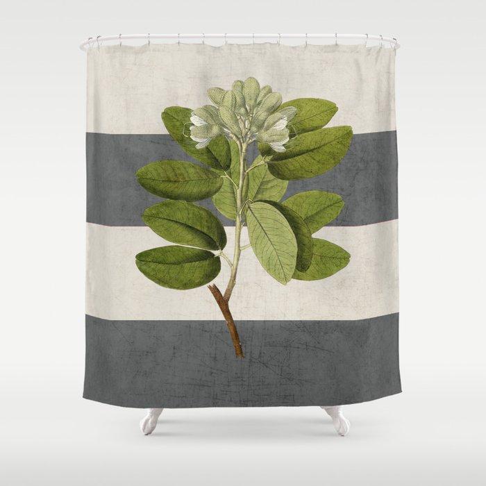 botanical stripes 5 -gray Shower Curtain