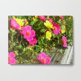 Portulaca Close Up Metal Print