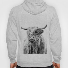 portrait of a highland cattle Hoody