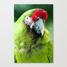 Green Macaw Canvas Print