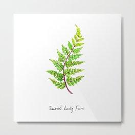 Eared Lady Fern Metal Print