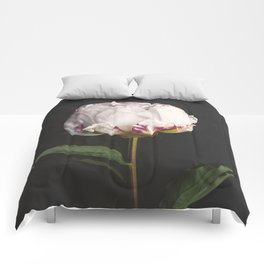Peony - simply perfect Comforters