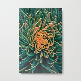 Green & orange succulent Metal Print