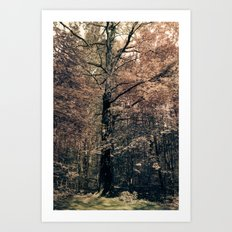 Tales from the trees 2 Art Print