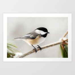 Winter Chickadee Painting Art Print