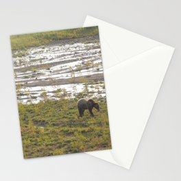 Grizzly bear at sundown Stationery Cards