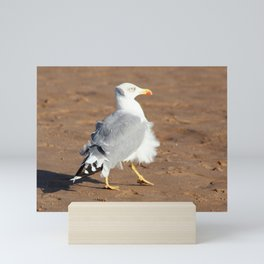 Seagull in a windy day with ruffled feathers Mini Art Print