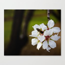 Spring Bee Canvas Print