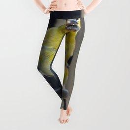 Goldfinch Leggings