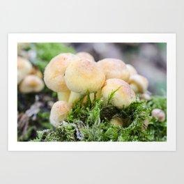 Sulphur tuft mushroom Art Print