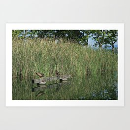 Calm and peace near the lake Art Print