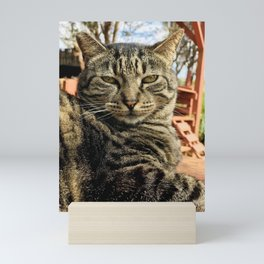 Big Boi (Lanai Cat Sanctuary) Mini Art Print