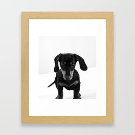 Weenie dog (black and white) Framed Art Print