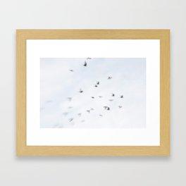 Bird Flight Framed Art Print
