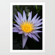 Wellington Flower Art Print