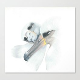 Albatross couple Canvas Print