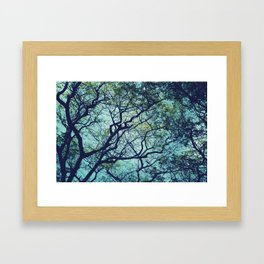 Rain Tree Framed Art Print