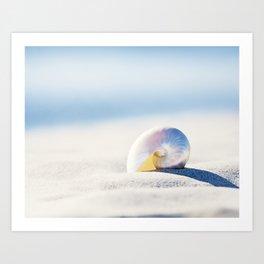 Pearl Nautilus Seashell Photography, Shell on Beach, Blue Coastal Photograph Art Print