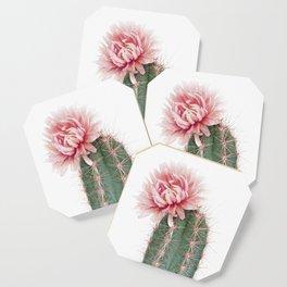 Pink Cactus Flower Coaster