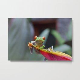 Red Eye Frog Metal Print