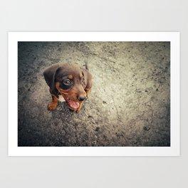 funny puppy Art Print