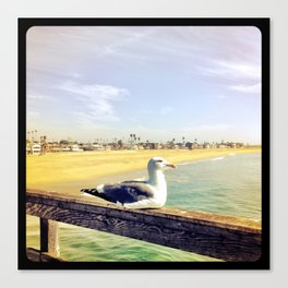 Lazy ass seagull. Canvas Print