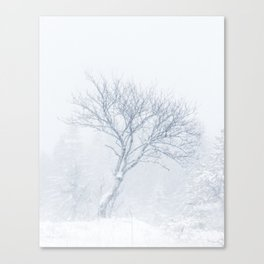 Lonely tree during snow storm in winter Canvas Print