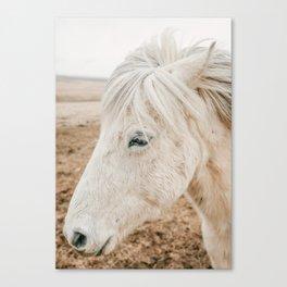 Wild Iceland Horse Canvas Print