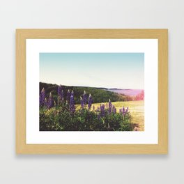 Lupine Flowers of the Maritimes Framed Art Print