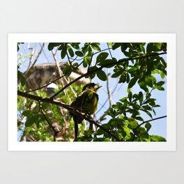 Bird I Art Print