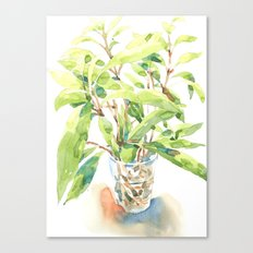 A glass of plant Canvas Print