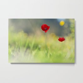 Two red poppies in a field of grass Metal Print