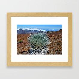 Silversword  Framed Art Print