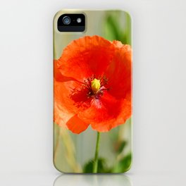 Mohnblume iPhone Case