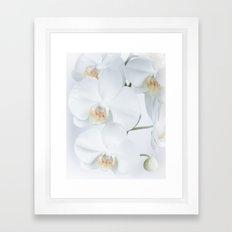 White orchids flowers pure white romantic Framed Art Print