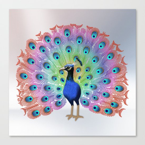 Colorful Peacock Canvas Print