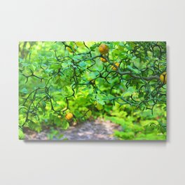 Fruit Vine Metal Print