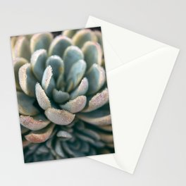 Autumn Succulent #2 Stationery Cards