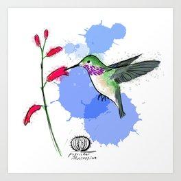 Calliope Hummingbird Art Print