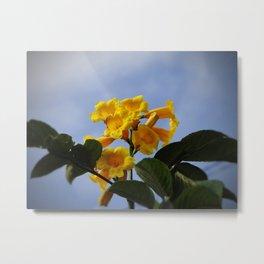 real yellow blossom Metal Print