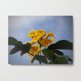 real yellow blossom Metal Print