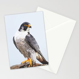 Majestic: Peregrine Falcon Stationery Cards