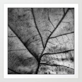 'Nature Network' Art Print