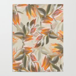 Orange Succulent Flowers Pastel Green Background #decor #society6 #buyart Poster