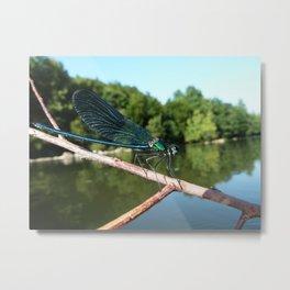Blu dragonfly Metal Print