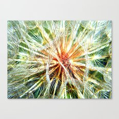 Up Close and Personal Dandelion Canvas Print
