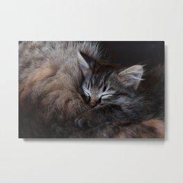 Sleeping Kitten Metal Print